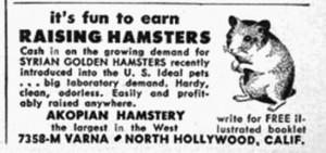 raising-hamsters